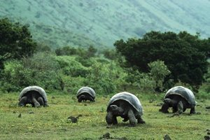 Iles galapagos les plus beau endroit du monde