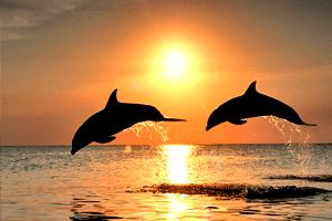 ouvrez les yeux - Dauphin sunset