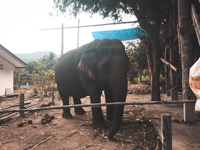 Voir les éléphants en Thailande