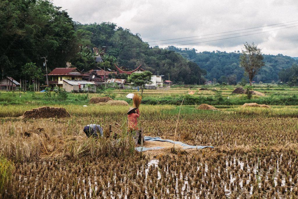 Sulawesi riziere